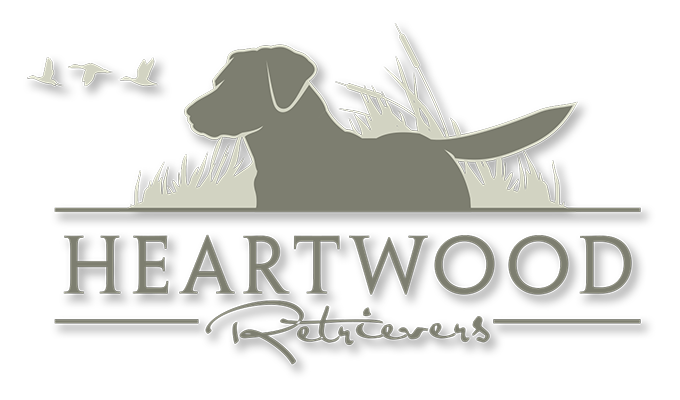 Heartwood Retrievers, LLC