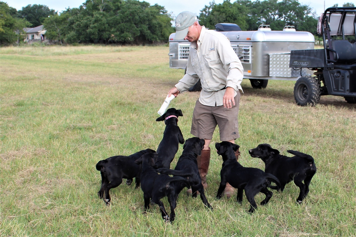 Gundog Breeder Texas